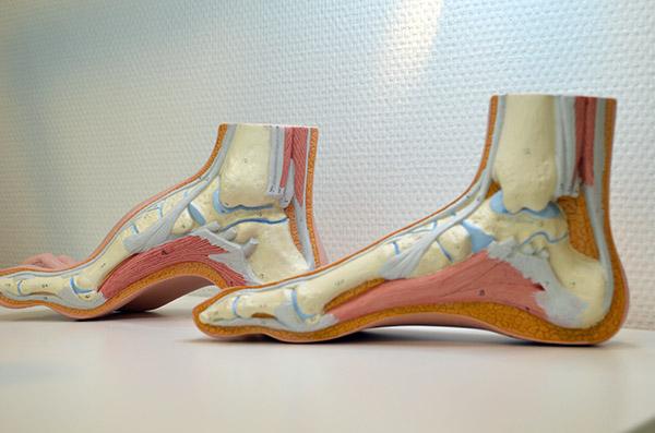 voet-doorsnede